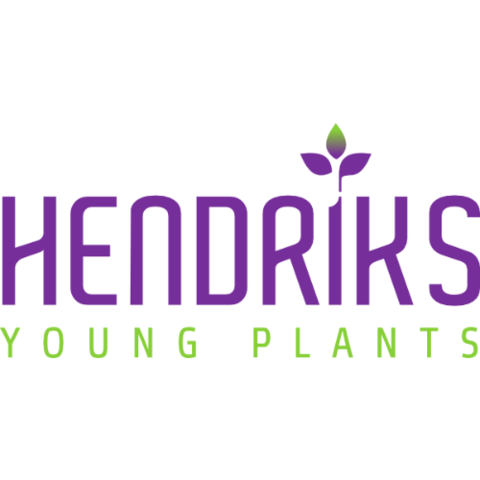 Hendriks Young Plants